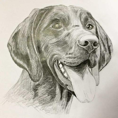 Kreslení zvířete