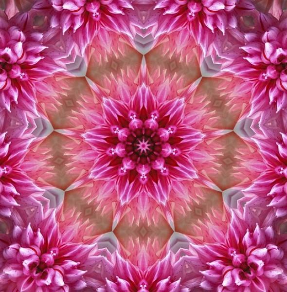 flower-1543895_640